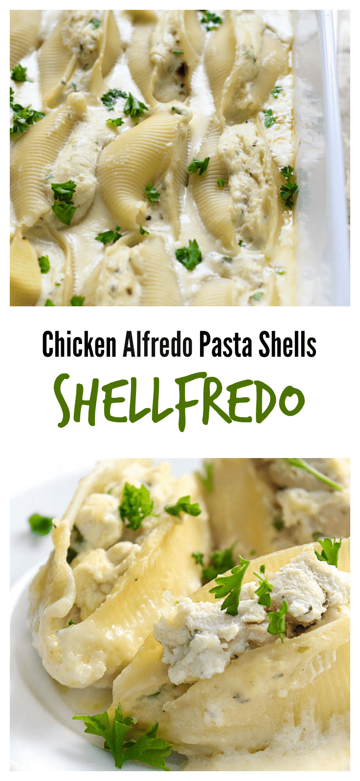 Chicken Alfredo pasta shells are decadent and delicious. These shellfredos have ricotta chicken stuffed shells swimming in a rich Alfredo sauce.